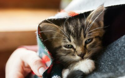 Importance of Cat Vaccination