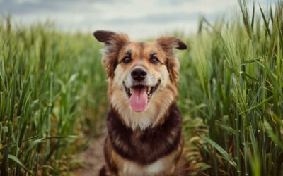 Importance of Dog Vaccination